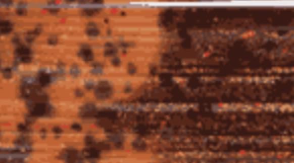 brown-orange-210