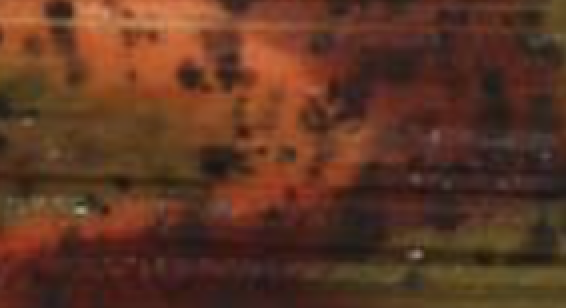 pumpkinorangebrown-877